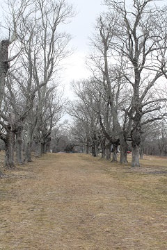 Oak Grove Farm - Lines of Trees